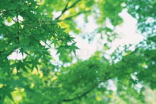 青々としている木の写真・画像素材[2356189]