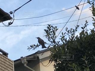 鳥 - No.354766