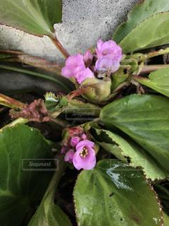 花の写真・画像素材[355256]