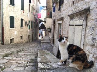 猫の写真・画像素材[371045]