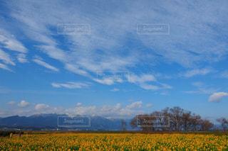 自然の写真・画像素材[354022]
