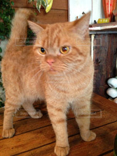 猫の写真・画像素材[352691]