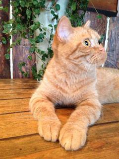猫の写真・画像素材[352692]