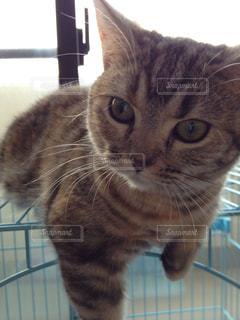 猫の写真・画像素材[352743]