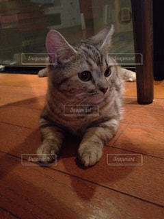 猫の写真・画像素材[352745]