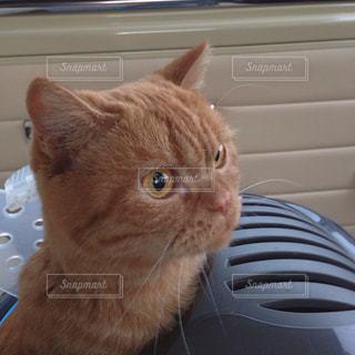 猫の写真・画像素材[352750]