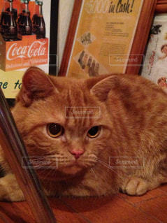猫の写真・画像素材[352751]