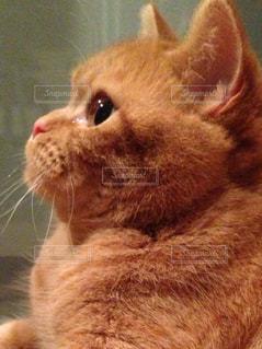 猫の写真・画像素材[352752]
