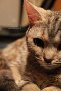 猫の写真・画像素材[352754]