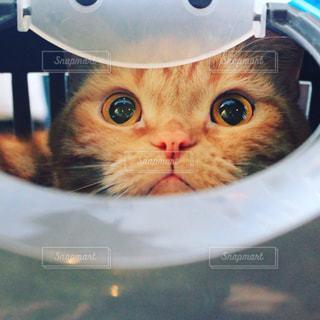 猫の写真・画像素材[352757]
