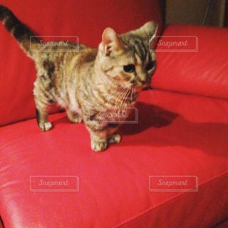 猫の写真・画像素材[352758]