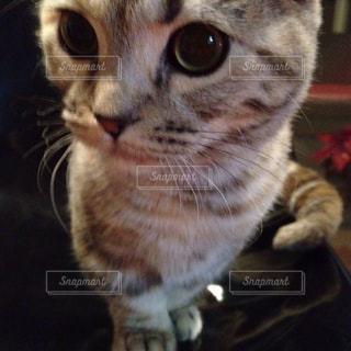 猫の写真・画像素材[352761]