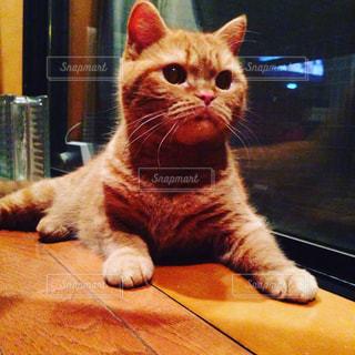 猫の写真・画像素材[352764]