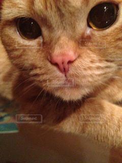 猫の写真・画像素材[352765]