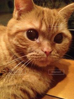 猫の写真・画像素材[352962]