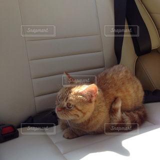 猫の写真・画像素材[352966]
