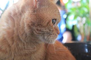 猫の写真・画像素材[352968]