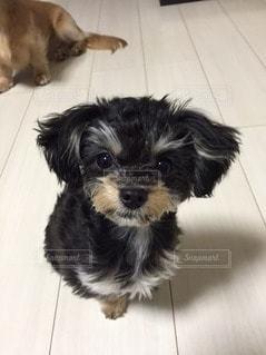犬の写真・画像素材[15854]