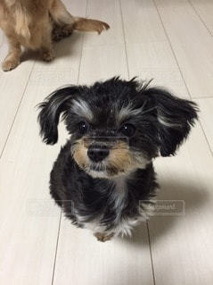 犬 - No.46045
