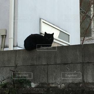 猫の写真・画像素材[353102]