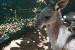 オーストラリアの写真・画像素材[353303]
