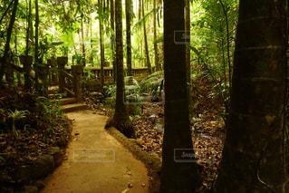 自然の写真・画像素材[353306]