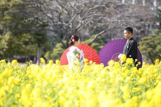 女性,男性,恋人,2人,春,カップル,菜の花,結婚式,庭園,人物,着物,夫婦,結婚,前撮り,和装,色打ち掛け,はかま