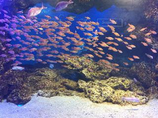 魚の写真・画像素材[355080]