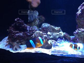 No.355081 魚