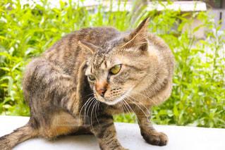 猫の写真・画像素材[489343]