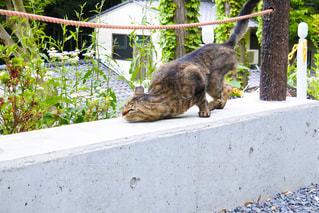 猫の写真・画像素材[501730]