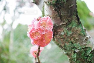 植物にピンクの花の写真・画像素材[1079946]