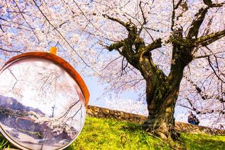 カーブミラーに映る桜の写真・画像素材[1921540]