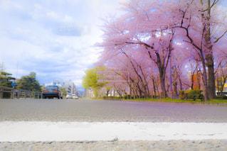 桜並木の写真・画像素材[2041408]