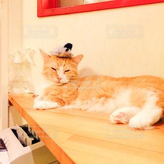 猫 - No.353198