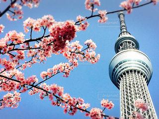 春 - No.353202