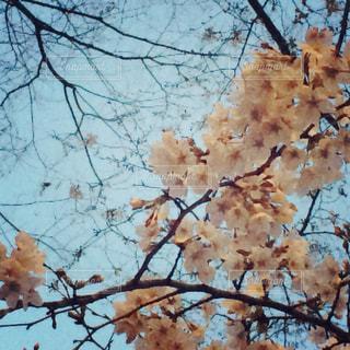 春 - No.353287