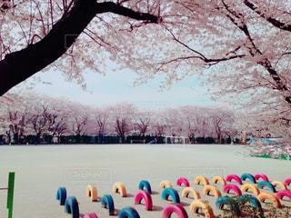 春の写真・画像素材[354466]