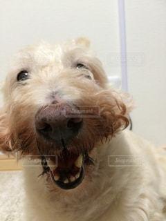 犬の写真・画像素材[353713]