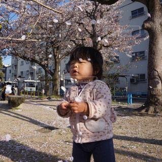 公園の写真・画像素材[358530]