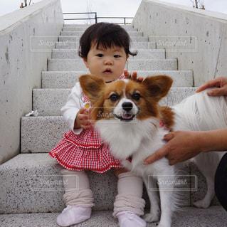 犬 - No.358594