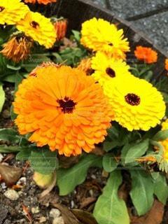 花の写真・画像素材[27342]