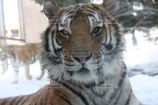 動物の写真・画像素材[46201]
