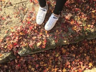 秋の写真・画像素材[521272]