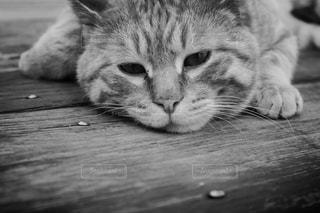 猫 - No.353394