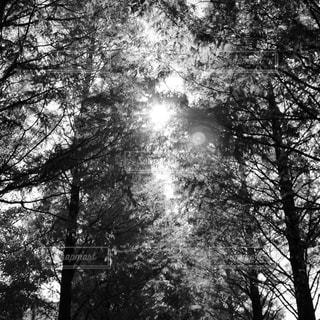 森林 - No.353398