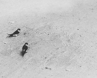 鳥 - No.353399