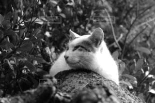 猫 - No.353401