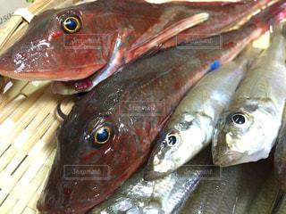 No.353487 魚