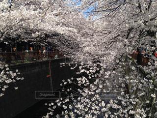 春 - No.385876